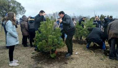 Pančevo: Veliki broj građana svih uzrasta u akciji sadnje drveća u Parku prijateljstva